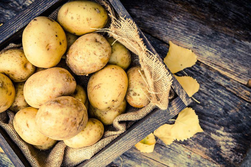 ジャガイモによる食中毒を予防するためにというトリビア