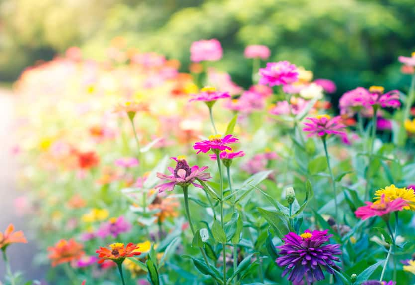 江戸時代後期に開園した花やしきは、当初は植物園だったというトリビア