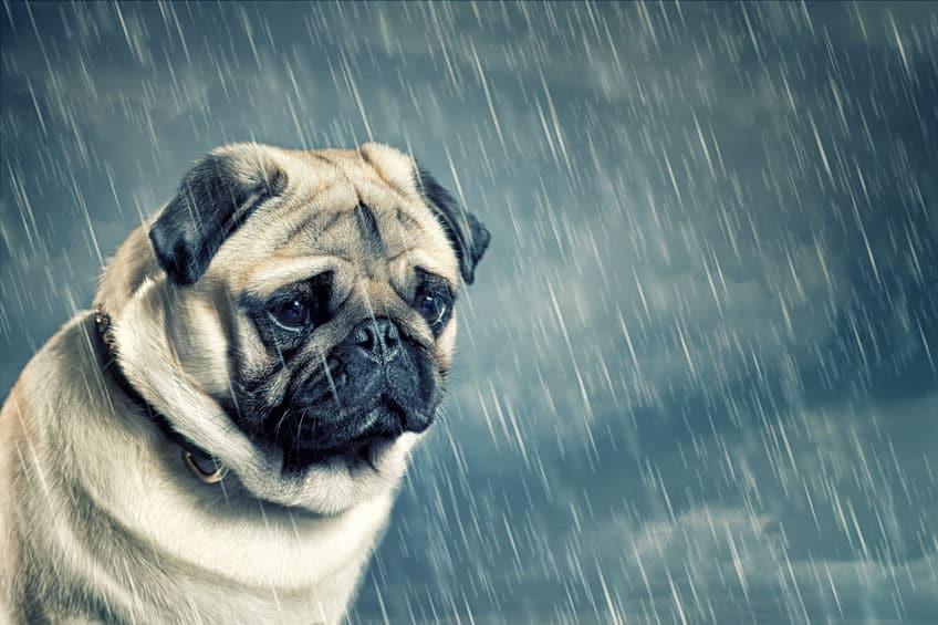 「時々雨」の定義に関する雑学
