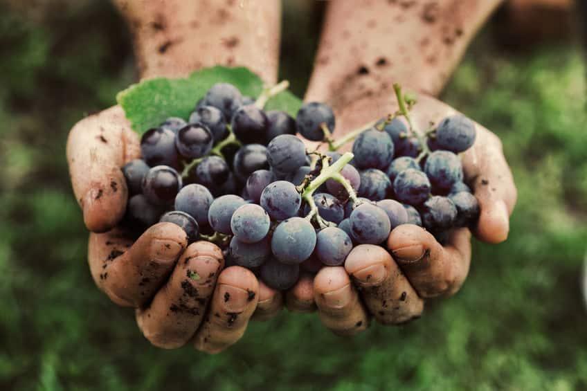 各ワインの作り方についてのトリビア