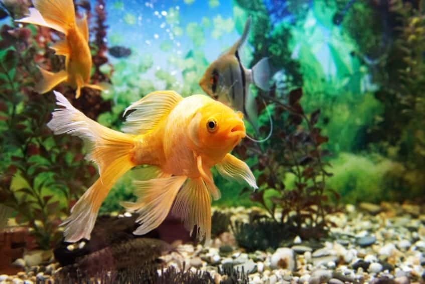 超合理的!魚には鼻の穴が4つある。嗅覚は犬並み!についてのトリビア