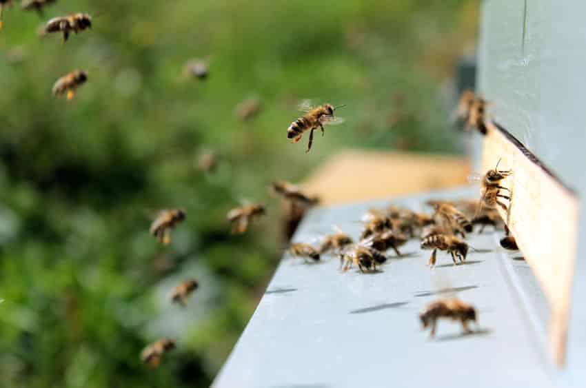 働きバチは1日6時間しか働いていないという雑学
