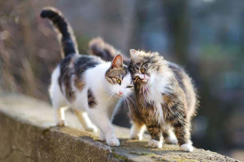 """4大タブーのひとつ!仏教の聖地""""高野山""""では猫が立入禁止だったという雑学まとめ"""