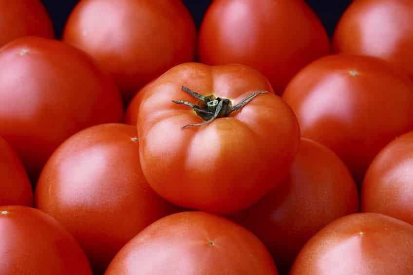 トマトは食虫植物だったという雑学