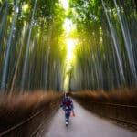 竹や笹は40〜120年に一度花を咲かせるという雑学