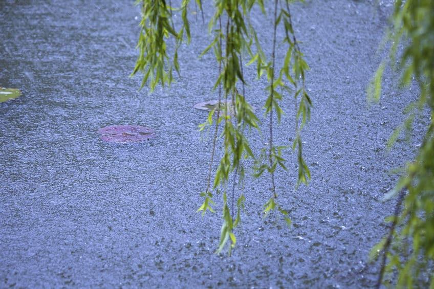 雨の種類は400を超える!?季節や降り方によって変わる雨の名前に関する雑学