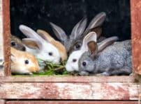 ウサギの耳が長い理由に関する雑学