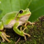 卵からそのままカエルの姿で生まれるカエルがいるという雑学