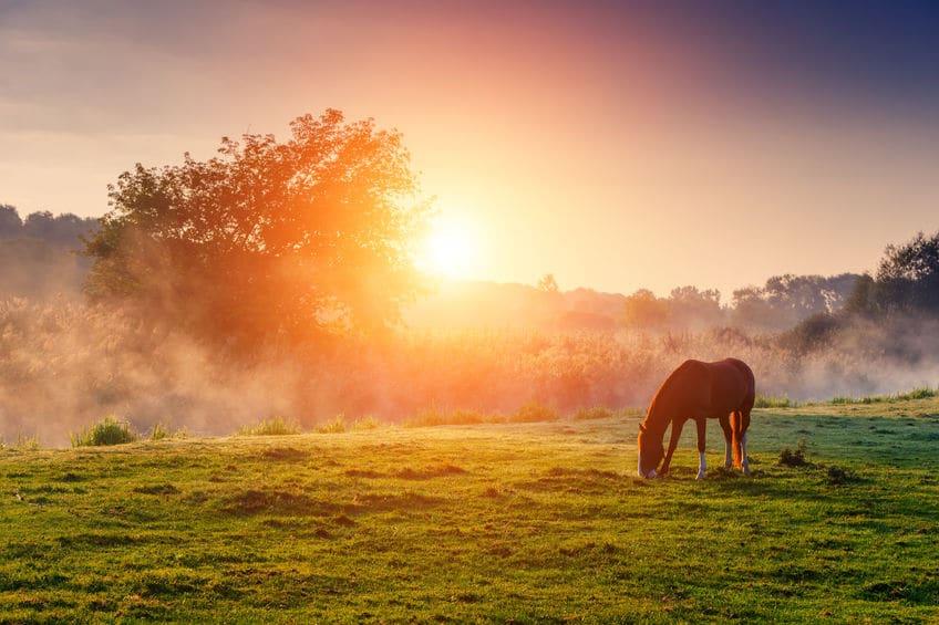 300年以上も放牧されている御崎馬についてのトリビア