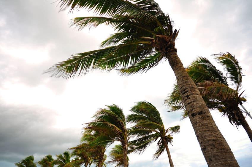 台風が日本に向かってくる原因は2種類の風と太平洋高気圧というトリビア