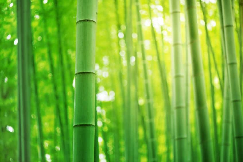 タケノコの節と節の間が伸びて竹になるというトリビア