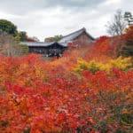 日本一古いトイレに関する雑学