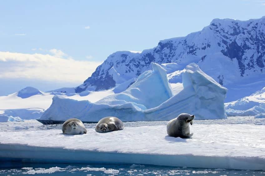 南極でも海水浴ができる場所があるという雑学