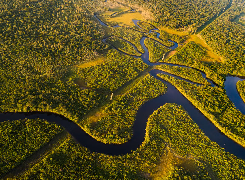 アマゾンにはピラニアより危険な生物がたくさんいるというトリビア