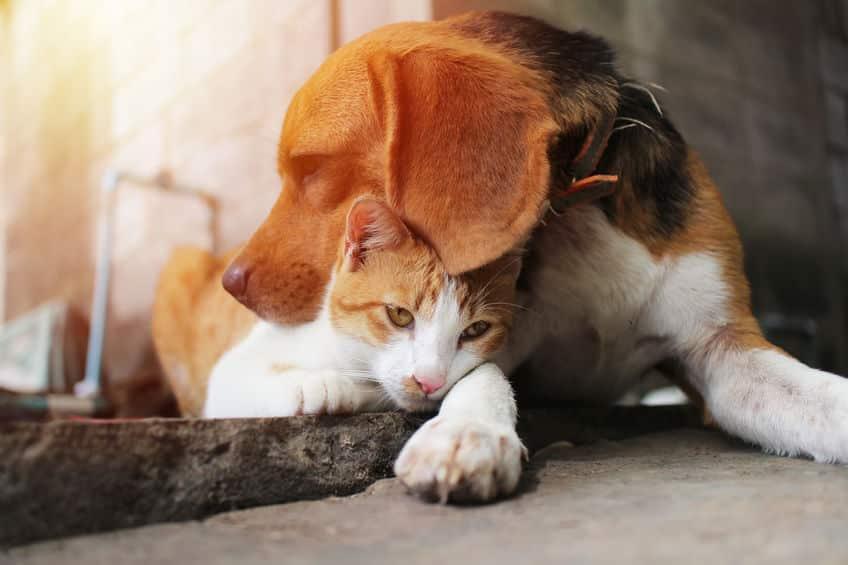 森のバターはペットに有害!犬・猫にアボカドを与えてはならない理由についての雑学まとめ