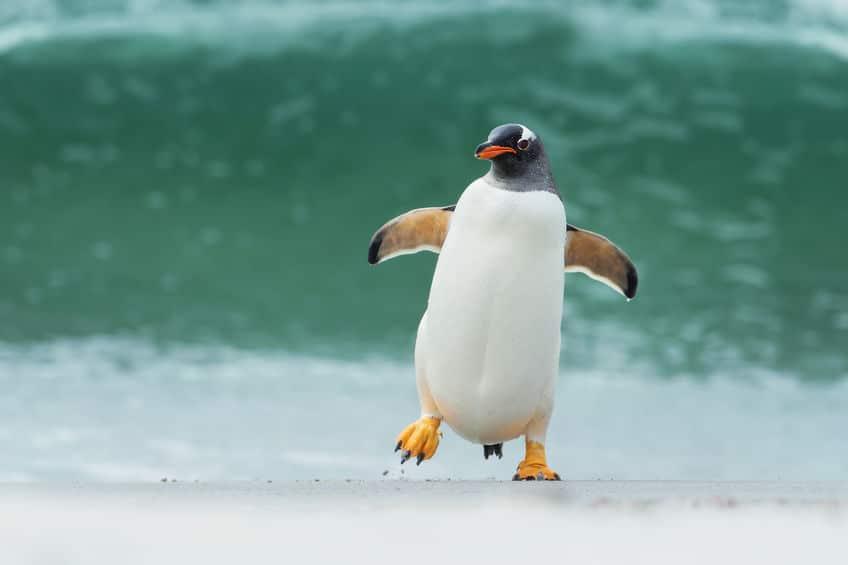 なぜペンギンは飛ばないの?というトリビア