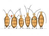 ゴキブリは実はキレイ好き?に関する雑学
