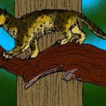 猫や犬などの先祖は「ミアキス」という雑学