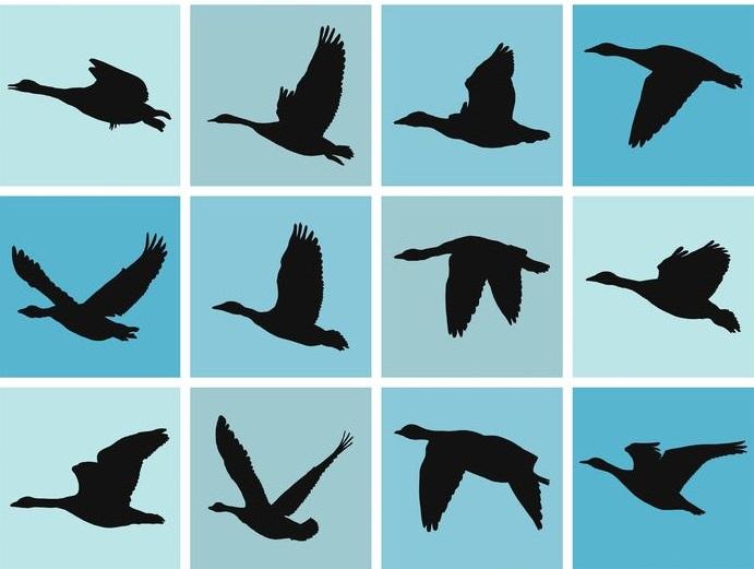 ペンギンは、空を飛んでいた鳥類から進化したというトリビア