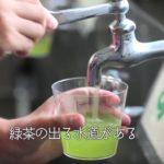 京都と静岡には水道からお茶が出る小学校があるという雑学