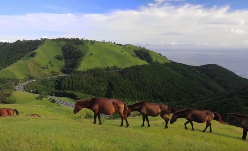 宮崎には野生の馬が生息する場所がある【都井岬】という雑学