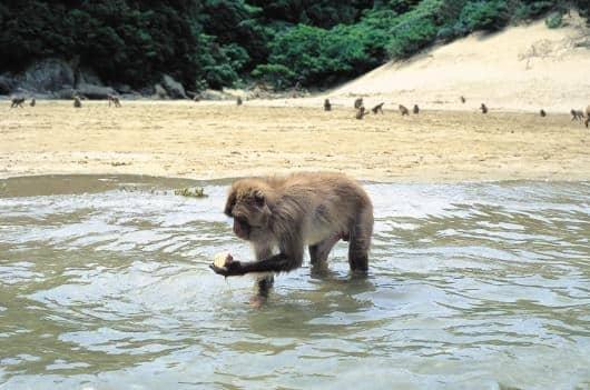 宮崎にはサルの楽園があるというトリビア
