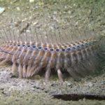 実は海にも毛虫と呼ばれる生物がいるという雑学