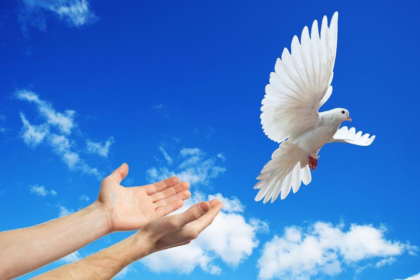 ハトは平和の象徴についてのトリビア