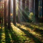 林と森の違いは規模の大きさだけではないという雑学