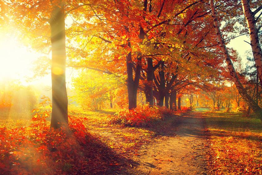 なんで「秋」がないの?というトリビア