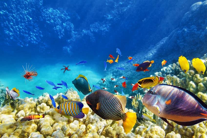 魚の嗅覚は犬並みで聴覚も人間よりはるかに発達しているというトリビア