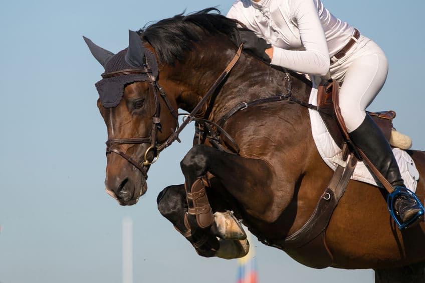 馬術競技だけ別の国…。メルボルン五輪のオーストラリアの失態という雑学まとめ