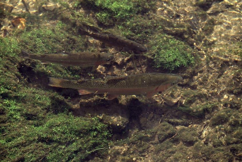 魚の水分補給は浸透圧と大きく関係するというトリビア