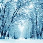 冬になると落ち葉が多くなる理由に関する雑学
