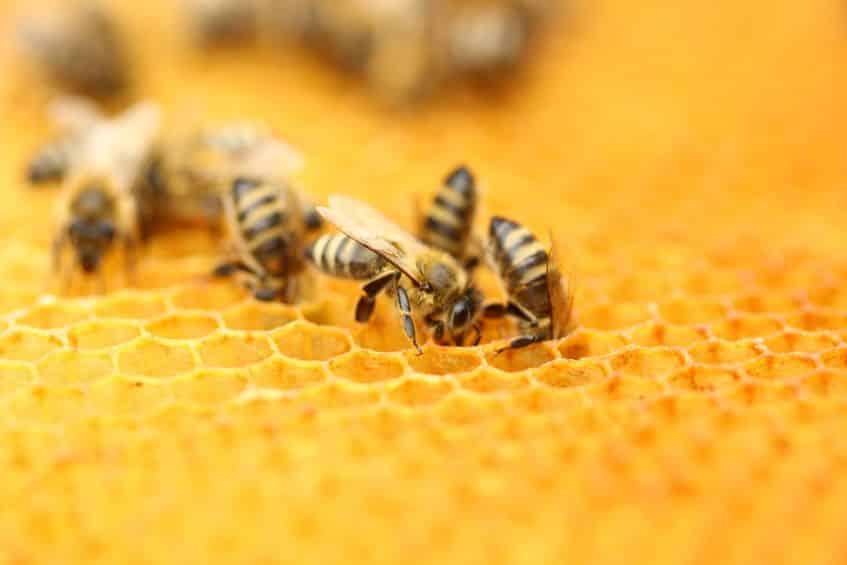 ミツバチが巣に戻ってこられる理由に関する雑学