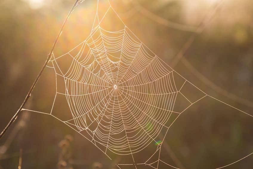 図解!蜘蛛は7種類の糸を使い分けるという雑学まとめ