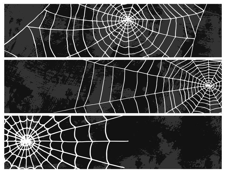 図解!蜘蛛の巣の7種類の糸についてのトリビア