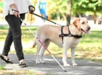 盲導犬には英語で話すという雑学