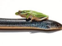 蛇に睨まれた蛙ということわざは嘘?に関する雑学