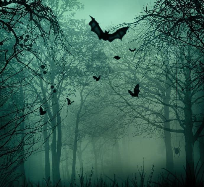 吸血コウモリは存在しない?実は傷口の血を舐めてるだけなんです。という雑学まとめ