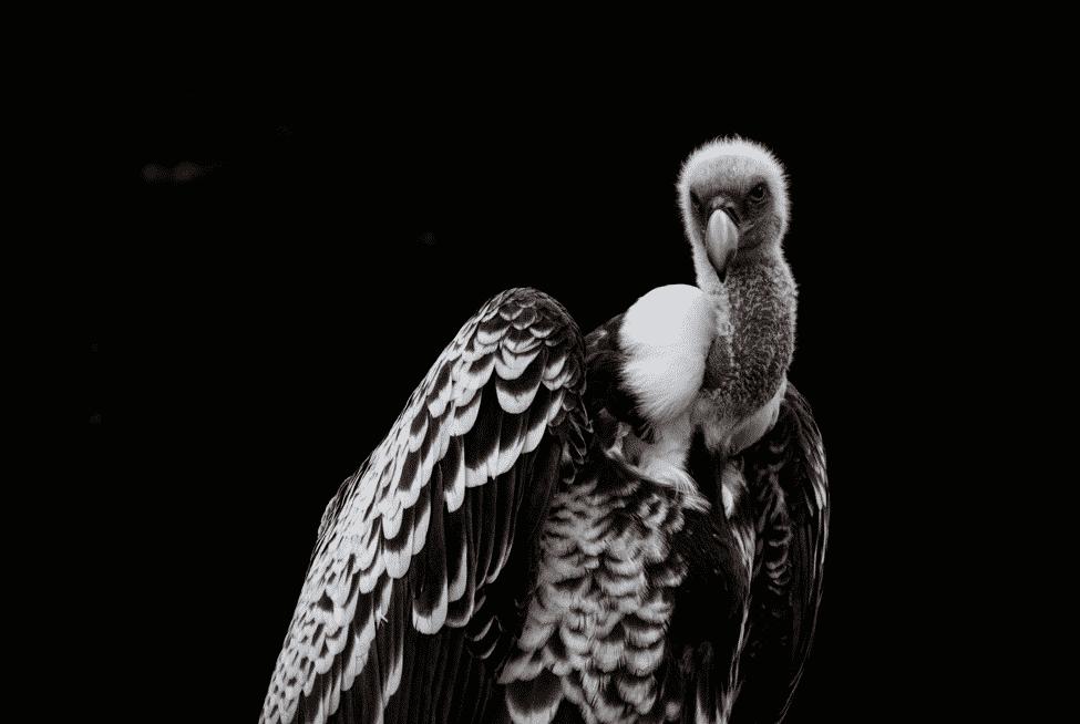 世界で一番高く飛べる鳥は飛行機よりも高く飛べる?に関する雑学