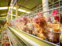 鳥インフルエンザが怖い本当の理由に関する雑学