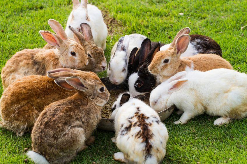 明治時代には「ウサギ税」が存在したという雑学