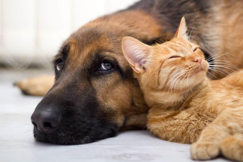 「ミアキス」が分かれて進化し、いまの猫や犬が存在するというトリビア