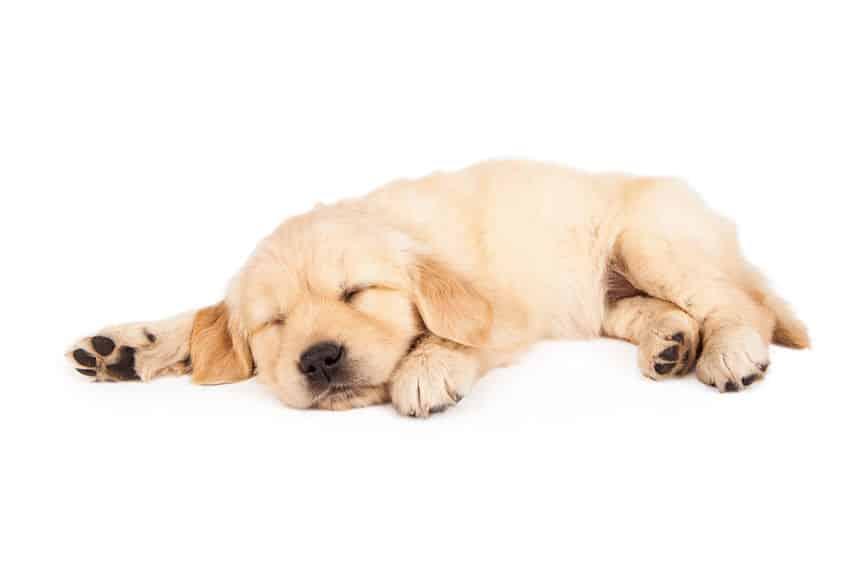犬も「夢」を見る?に関する雑学