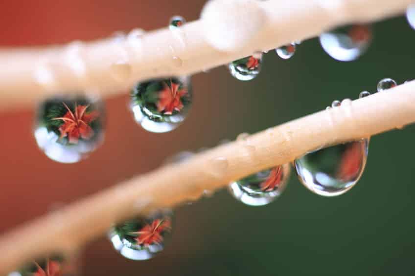 夕立の雨は通常の雨粒の5倍ほどの大きさで落ちてくるについてのトリビア