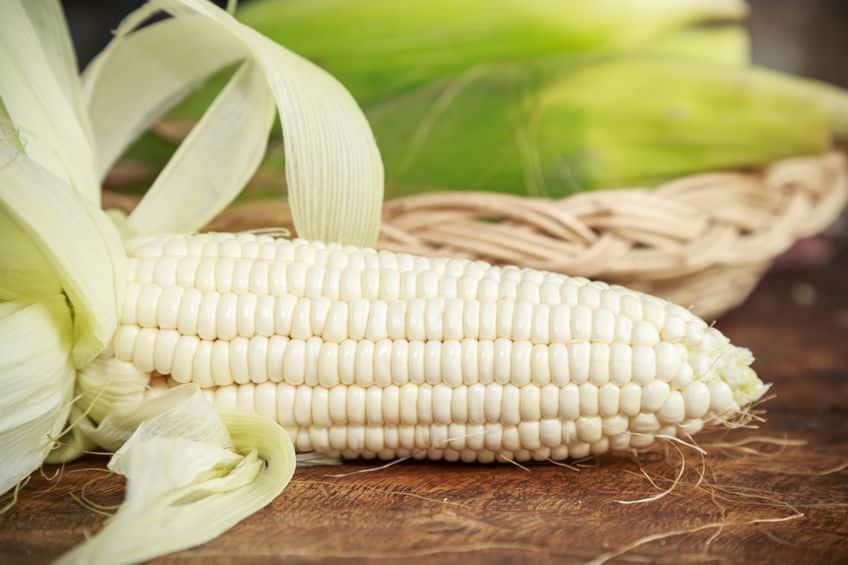 生でも甘くておいしい、純白のトウモロコシに関する雑学
