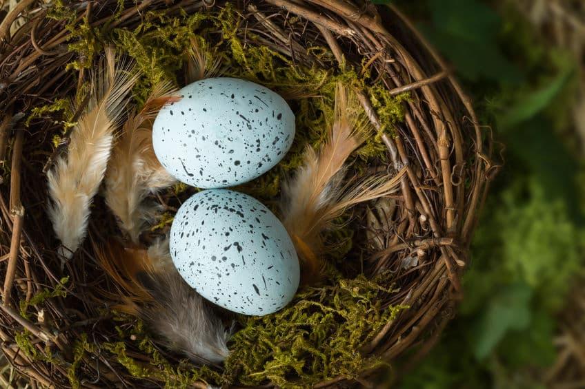 鳥の卵が楕円形なのは巣からの転落を防ぐためという雑学