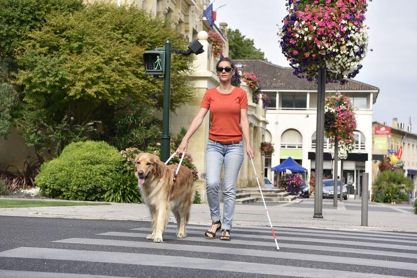 盲導犬への指示は明確なほうがいいから「英語」についてのトリビア