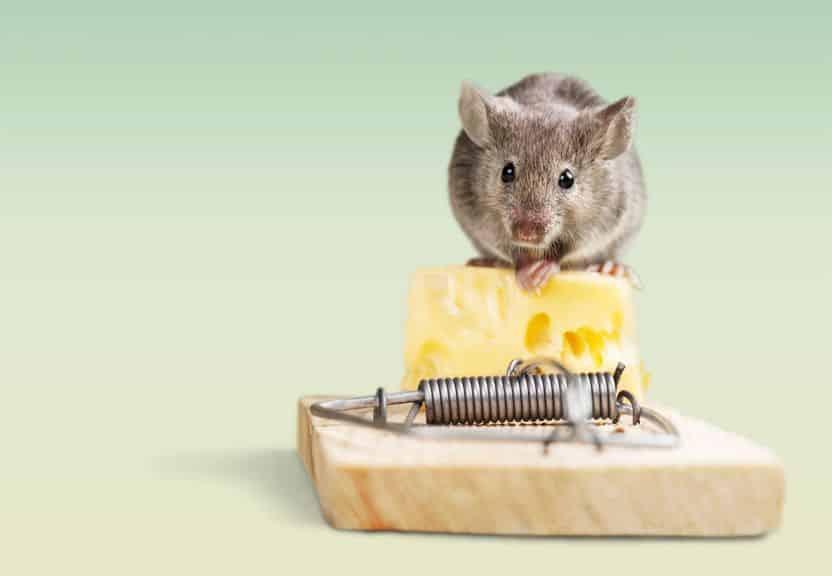 チーズはネズミの好物ではなかった!という雑学